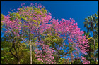 Botanic Gardens, Brisbane, QLD, Australia