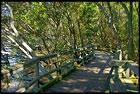 Mangrove Boardwalk, Botanic Gardens, Brisbane, QLD, Australia