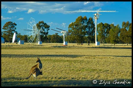 Kangaroo, Кенгуру, Radio Antenna Dishes, Радиотелескоп, Australian Telescope Compact Array, Narrabri, NSW, Australia