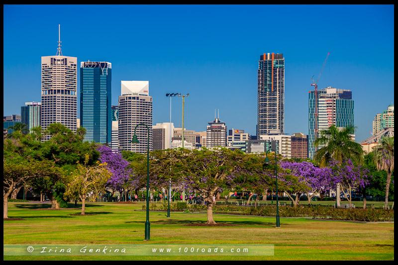 Нью-Фрам-Парк, New Farm Park, Брисбен, Brisbane, Квинсленд, Queensland, Австралия, Australia