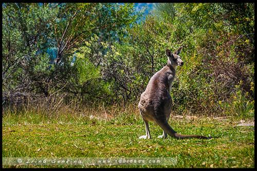 Заповедник Тидбинбилла, Tidbinbilla Nature Reserve, Канберра, Canberra, Австралийская столичная территория, ACT, Австралия, Australia