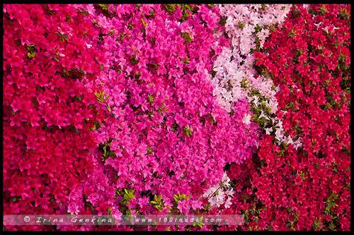 Фестиваль Садов в Леуре, Leura Gardens Festival, Леура, Льюра, Leura, Голубые Горы, Blue Mountains, Новый Южный Уэльс, NSW, Австралия, Australia