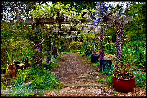 Дом в тупике, Dead End House, Фестиваль Садов в Леуре, Leura Gardens Festival, Леура, Льюра, Leura, Голубые Горы, Blue Mountains, Новый Южный Уэльс, NSW, Австралия, Australia