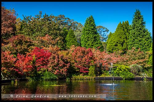 Сад Бебеа, Bebeah Garden, Гора Вилсон, Mount Wilson, Голубые Горы, Blue Mountains, Новый Южный Уэльс, NSW, Австралия, Australia