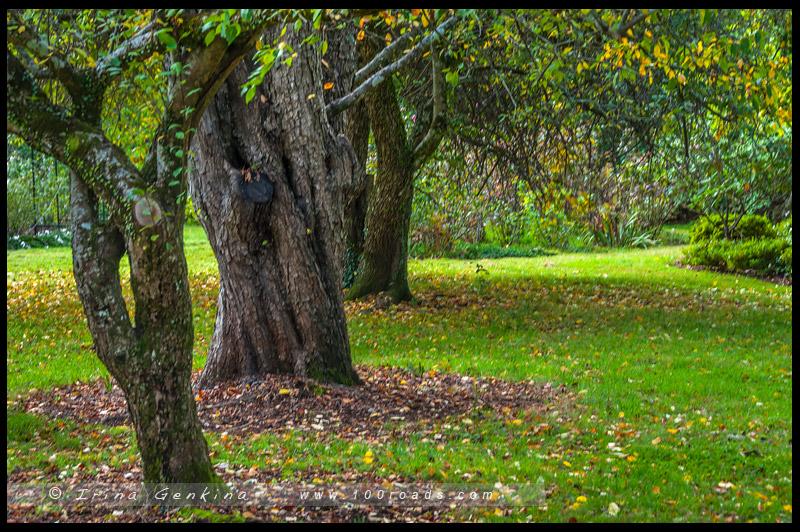 Сад Нуру, Nooroo Garden, Гора Вилсон, Mount Wilson, Голубые Горы, Blue Mountains, Новый Южный Уэльс, NSW, Австралия, Australia