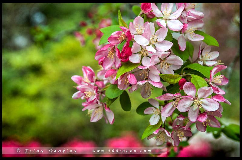 Mt Wilson Spring Blossom Festival, Сад Нуру, Nooroo Garden, Гора Вилсон, Mount Wilson, Голубые Горы, Blue Mountains, Новый Южный Уэльс, NSW, Австралия, Australia