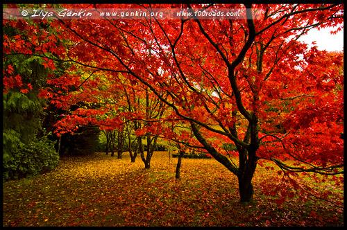<В осеннем саду Bebeah, Bebeah Garden, Гора Вилсон, Mount Wilson, Голубые Горы, Blue Mountains, Новый Южный Уэльс, NSW, Австралия, Australia