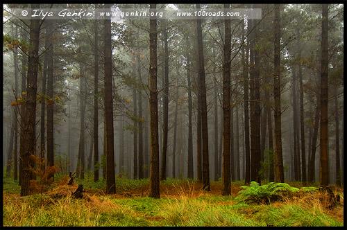 <State Forest, Оберон, Oberon, Новый Южный Уэльс, NSW, Австралия, Australia