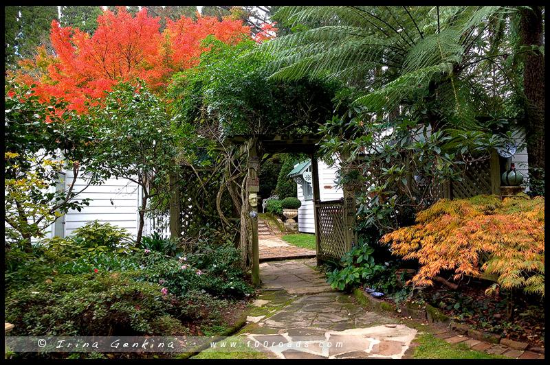 Falls Gallery, Вентворт Фолс, Wentworth Falls, Голубые Горы, Blue Mountains, Новый Южный Уэльс, NSW, Австралия, Australia