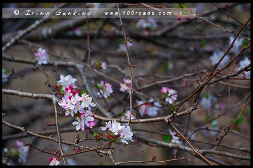 Эдогавский Памятный Сад, Edogawa Commemorative Garden, Госфорд, Gosford, Новый Южный Уэльс, NSW, Австралия, Australia