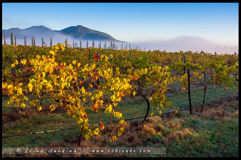 Топ-10 Австралия – Лучшие винные регионы