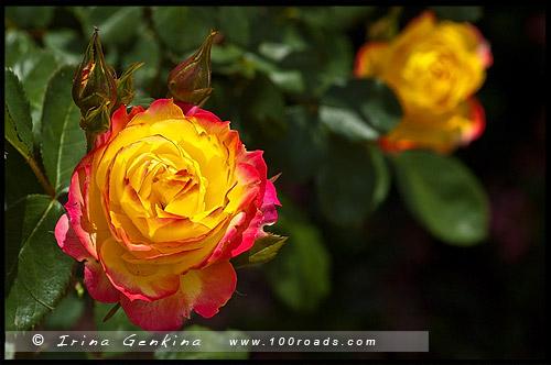 Сады Долины Хантер, Hunter Valley Gardens, Долина Хантер, Hunter Valley, Новый Южный Уэльс, NSW, Австралия, Australia
