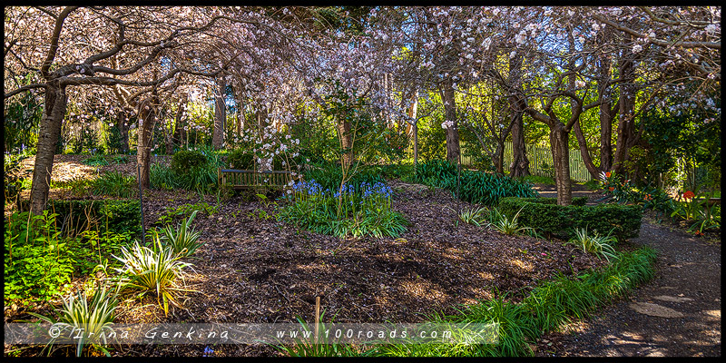Сад Шпили наперстянки, Foxglove Spires Open Garden, Тилба, Tilba, Нарума, Narooma, Новый Южный Уэльс, NSW, Австралия, Australia
