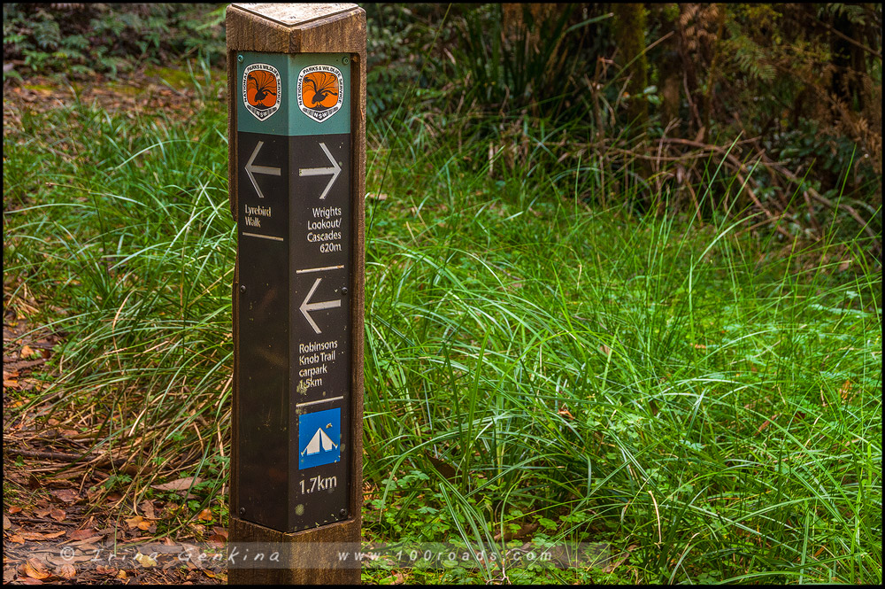 Национальный парк Новой Англии, New England National Park, Новая Англия, New England, Новый Южный Уэльс, New South Wales, NSW, Австралия, Australia