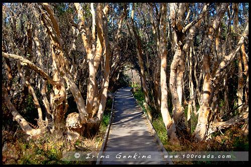 Деревянная тропинка, Парк Барри, Barry Park, Залив Фингал, Fingal Bay, Порт Стивенс, Порт Стефенс, Port Stephens, Новый Южный Уэльс, NSW, Австралия, Australia