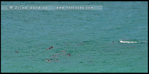 Сахарная голова, Sugarloaf Point, Скалы Тюленей, Seal Rocks, Район Великих Озер, Great Lakes, Новый Южный Уэльс, NSW, Австралия, Australia