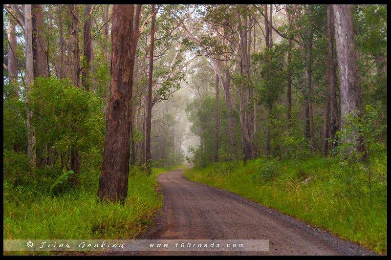 Bundjalung National Park, Новый Южный Уэльс, New South Wales, Австралия, Australia