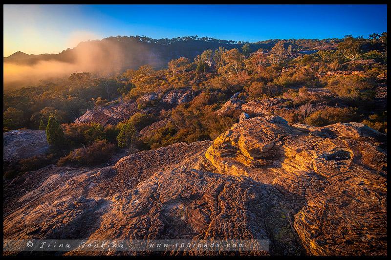 Болото Даннс, Dunns swamp, Национальный парк Воллемай, Wollemi National Park, Новый Южный Уэльс, NSW, Австралия, Australia