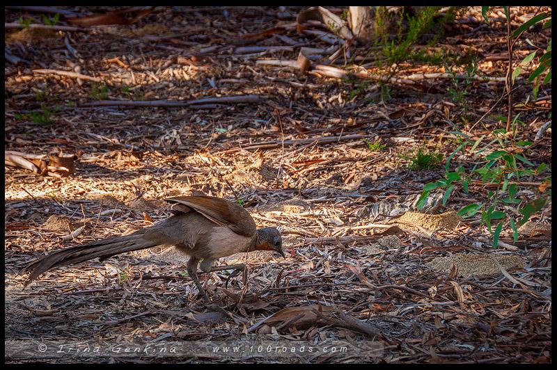 Platypus point, Болото Даннс, Dunns swamp, Национальный парк Воллемай, Wollemi National Park, Новый Южный Уэльс, NSW, Австралия, Australia