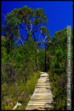 Тропа к Пещере Рук, Manja Shelter, Парк Грэмпианс, Grampians Natonal Park, Виктория, Victoria, VIC, Австралия, Australia