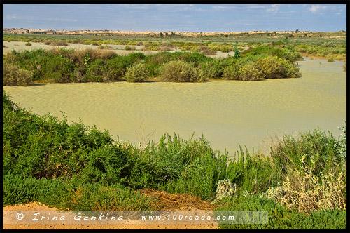 Вода на территории Национального Парка Манго, Mungo Natonal Park, Новый Южный Уэльс, New South Wales, NSW, Австралия, Australia