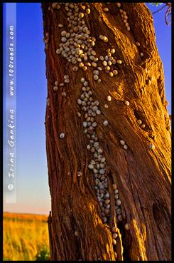 Большой изгиб, Big Bend, Мюррей, Murray, Южная Австралия, South Australia, SA, Австралия, Australia