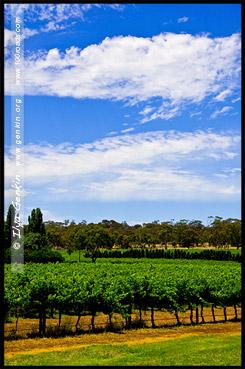 Винарня района Кунаварра, Winery at Coonawarra region, Пенола, Penola, Южная Австралия, South Australia, SA, Австралия, Australia