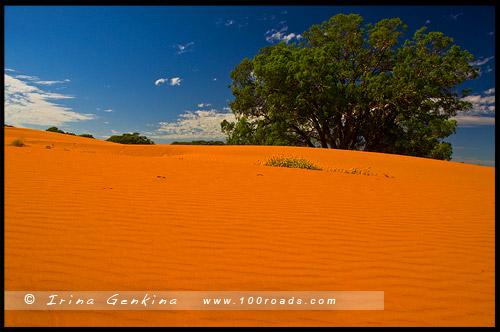 Песчанные Холмы Перри, Perry Sandhills, Вентворт, Wentworth, Новый Южный Уэльс, New South Wales, NSW, Австралия, Australia