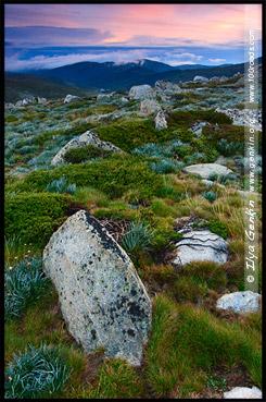 Национальный Парк Костюшко, Kosciuszko National Park, Снежные Горы, Snowy Mountains, Новый Южный Уэльс, New South Wales, NSW, Австралия, Australia