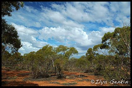 Outback, NSW, Australia