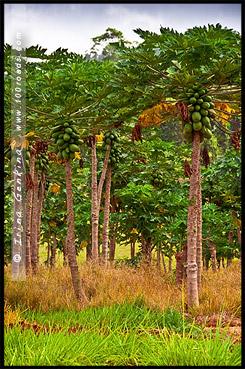 Плато Атертон, Atherton Tableland, Queensland, Квинсленд, QLD, Австралия, Australia
