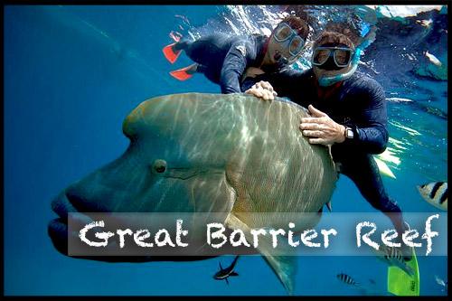 Большой Барьерный Риф, Great Barrier Reef, Queensland, Квинсленд, QLD, Австралия, Australia