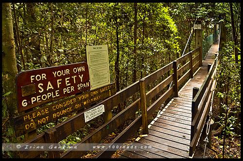 Национальный парк Ламингтон, Lamington National Park, Золотое побережье, Gold Coast, Квинсленд, Queensland, Австралия, Australia