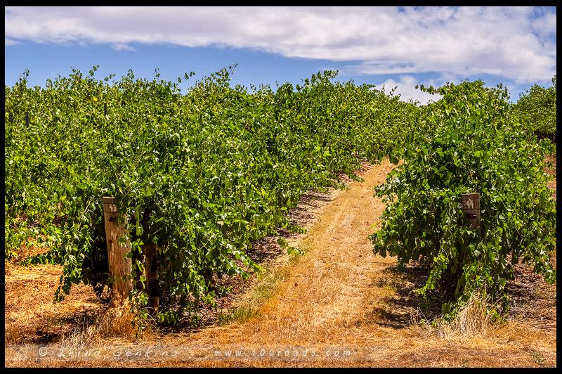 Долина Клер, Clare Valley, Южная Австралия, South Australia, Австралия, Australia