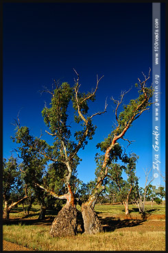 Moralana Scenic Drive, Северная цепь гор Флиндерс, Northern Flinders Ranges, Аутбек, Аутбэк, Outback, Южная Australia, South Australia, Австралия, Australia