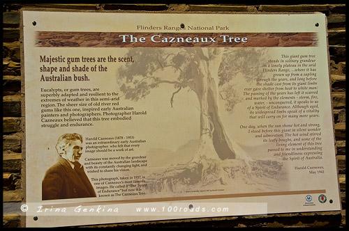 Дерево Казно, Cazneaux Tree, Вилпена Поунд, Wilpena Pound, Северная цепь гор Флиндерс, Northern Flinders Ranges, Аутбек, Аутбэк, Outback, Южная Australia, South Australia, Австралия, Australia