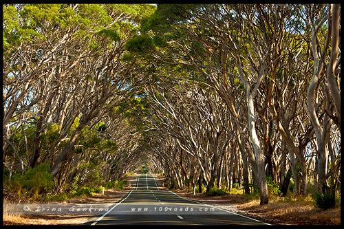 South Coast Road, Остров Кенгуру, Kangaroo Island, Южная Австралия, South Australia, Австралия, Australia