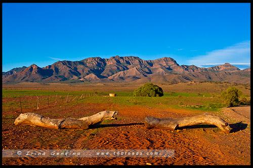 Merna Mora Station, Северная цепь гор Флиндерс, Northern Flinders Ranges, Южная Австралия, South Australia, Австралия, Australia