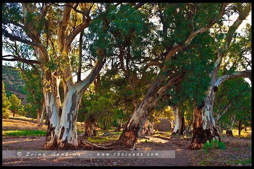 Moralana Scenic Drive, Северная цепь гор Флиндерс, Northern Flinders Ranges, Южная Австралия, South Australia, Австралия, Australia