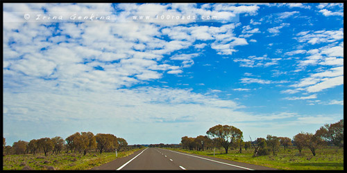 Трасса Стюрт, Sturt Highway, Новый Южный Уэльс, NSW, Австралия, Australia