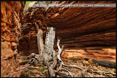 Узкое место, The Narrows, Ущелье Аллигатора, Alligator Gorge, Маунт Ремаркабл, Mt Remarkable, Южная Australia, South Australia, Австралия, Australia