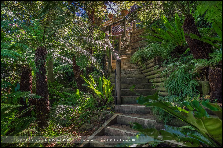 Сад Айткен, Aitken garden, Сазерленд, Sutherland, Сидней, Sydney, Новый Южный Уэльс, New South Wales, Австралия, Australia