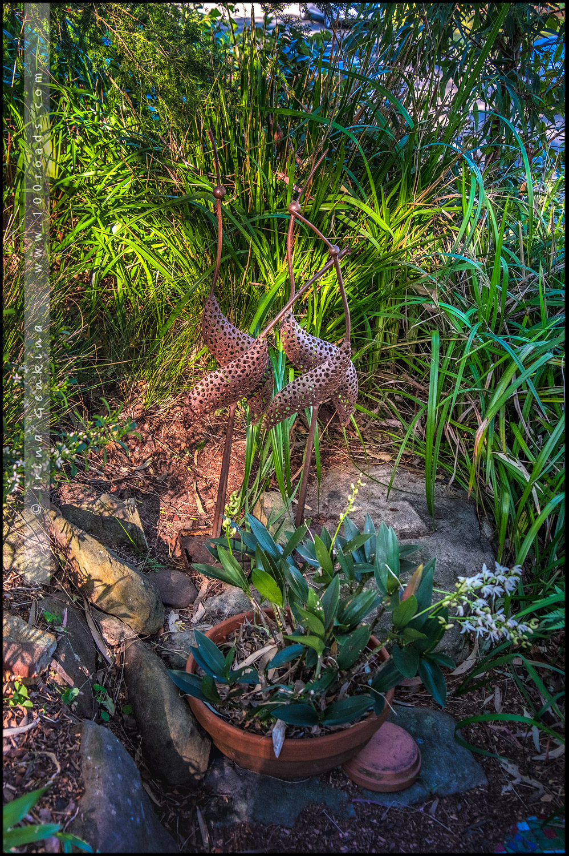 Сад МакКолл, McColl garden, Сазерленд, Sutherland, Сидней, Sydney, Новый Южный Уэльс, New South Wales, Австралия, Australia