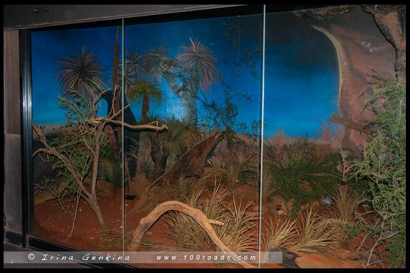 Зоопарк Таронга, Taronga Zoo, Сидней, Sydney, Австралия, Australia