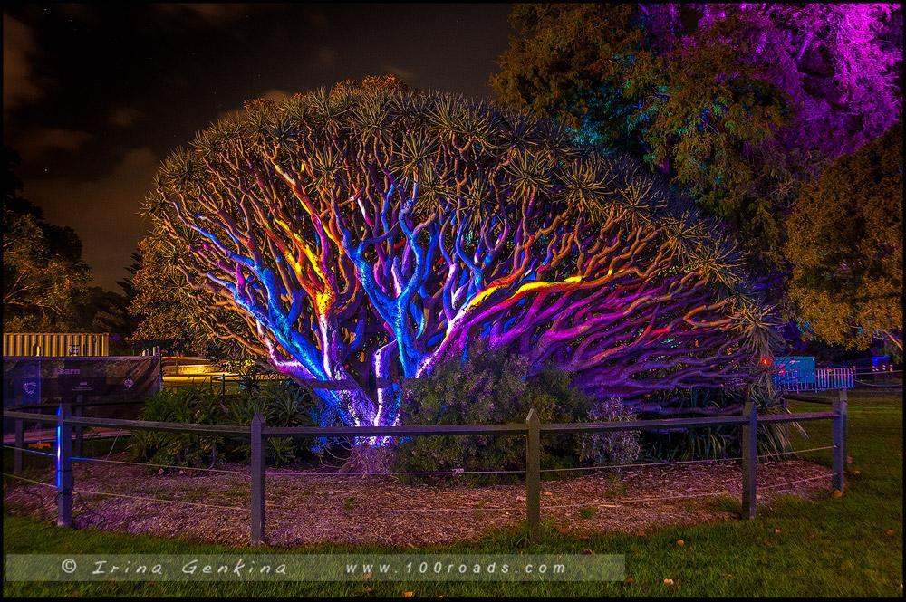 Яркий Сидней, Живой Сидней, Vivid Sydney, Сидней, Sydney, Австралия, Australia