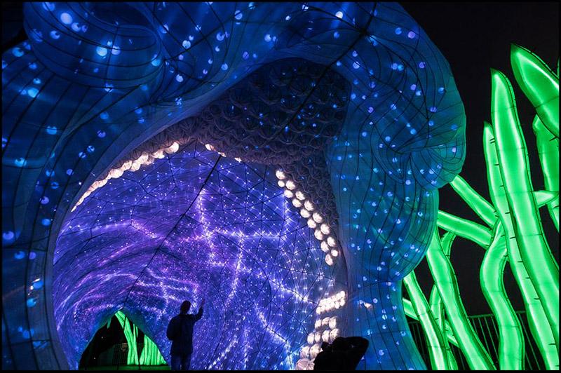Зоопарк Таронга, Taronga Zoo, Яркий Сидней, Живой Сидней, Vivid Sydney, Сидней, Sydney, Австралия, Australia
