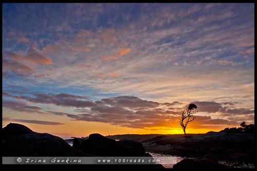 Биналонг Бэй, Binalong Bay, Тасмания, Tasmania, Австралия, Australia