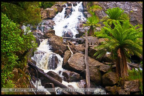 Водопад Св Каламба, St Columba Falls, Тасмания, Tasmania, Австралия, Australia