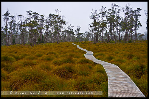 Cradle Valley Boardwalk, Крэдл Маунтен, Cradle Mountain, Тасмания, Tasmania, Австралия, Australia