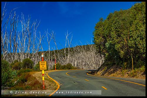 Высокогорье Богонг, Bogong High Plains, Фолс Крик, Falls Creek, Викторианские Альпы, Victorian Alps, Австралия, Australia